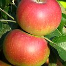 Apples by Maria1606