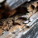 Wooden Fence in Macro by Corkle