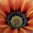 Orange Flower Close-Up by Chanzz