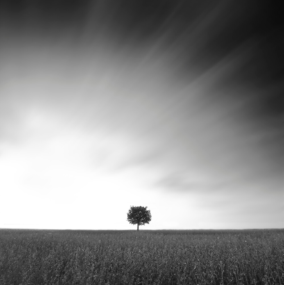 Lonely Tree by Squance