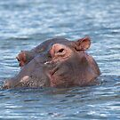 Cheeky Hippo by Duncan Payne