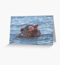 Cheeky Hippo Greeting Card
