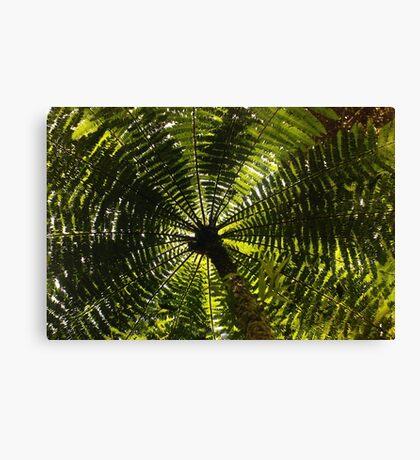 fernished forest, madagascar Canvas Print