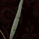 Gum leaf by acmebw