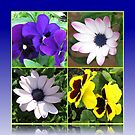 Pretty Pansies and Cute Cape Daisies Floral Collage von BlueMoonRose