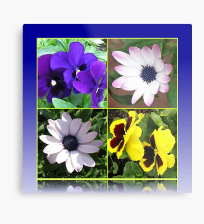 Pretty Pansies and Cute Cape Daisies Floral Collage Metallbild