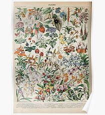 Adolphe Millot fleurs D Poster