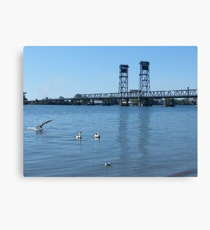 Coming in for a landing! Canvas Print