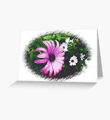 Large, beautiful Purple Daisy Greeting Card