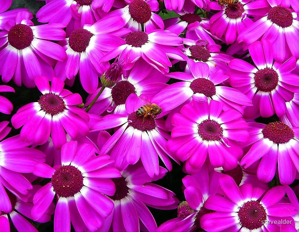 Busy, Busy Bee by stevealder