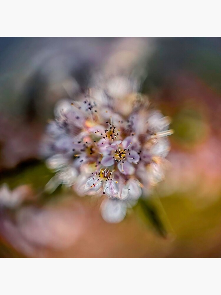 Flower Planet #2 by utilityimage