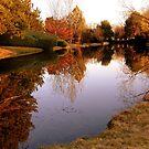 The glory of autumn by Cricket Jones