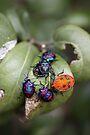 Bug Meeting by yolanda