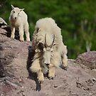«Cabra de montaña niñera y niño» de Whisperingpeaks