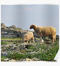 Ewe Seen This View Poster