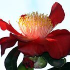 Camellia Flower by Patricia  Knowles