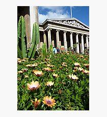 Osteospermum and Neoclassical. British Museum, London, England. Photographic Print
