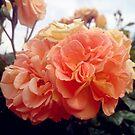 Rose, gefüllt von Gourmetkater