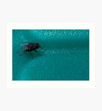 Blue Arsed Fly Art Print