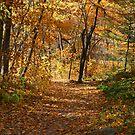 Autumn At Hawthorn Hollow by kkphoto1