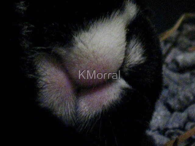 Bunny Nose by KMorral