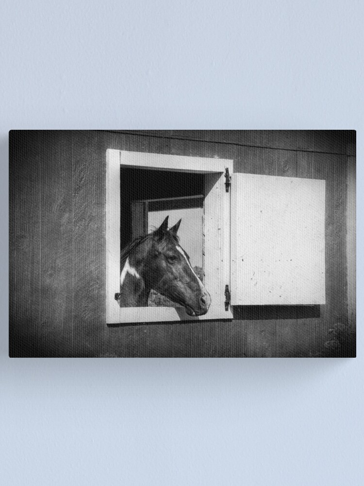 Alternate view of Shadow Canvas Print