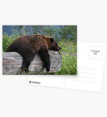 Nap Time Postcards
