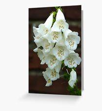 Treasure trove - gold flecked white foxglove Greeting Card