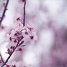 Pastel Pink by Josie Eldred