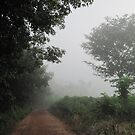 Misty Morning Track by Hugh Fathers
