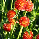 Fiery Flower by SilverLilyMoon