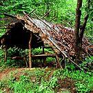 Forest Guard's Shelter by Biren Brahmbhatt