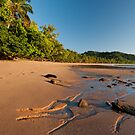 Natural Images by Susan Kelly - The Wet Tropics of North Queensland by Susan Kelly