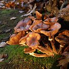 Fungi time by Janone