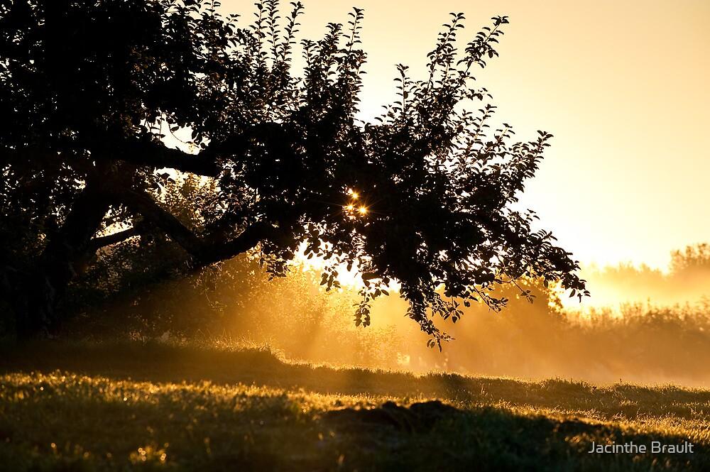 Glorious Sun 2 by Jacinthe Brault