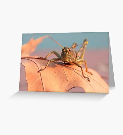 Hoppy Greeting Card