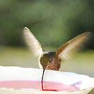 Hummingbird feeding by Klaus Bohn