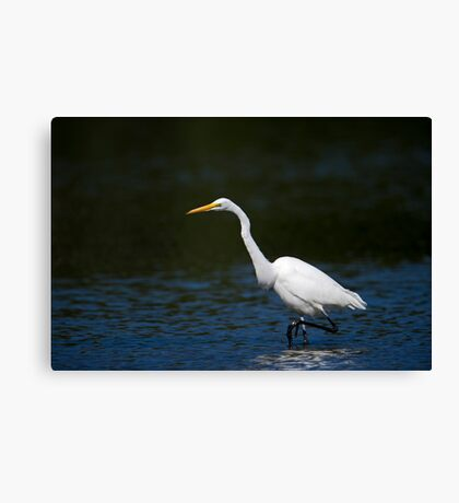 A walkabout Canvas Print