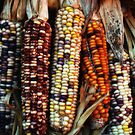 Corn Colors by Mattie Bryant