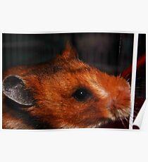 A Furry Companion Poster
