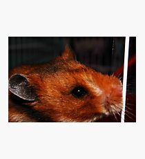 A Furry Companion Photographic Print
