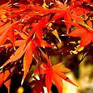 Autumn hues by Tamara Travers