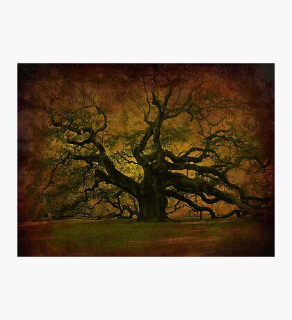The Angel Oak in Charleston SC Photographic Print
