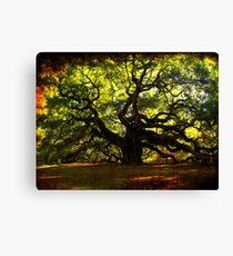 The famous Angel Oak Tree Canvas Print