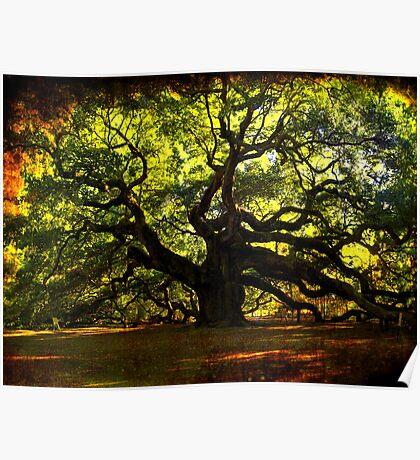 The famous Angel Oak Tree Poster