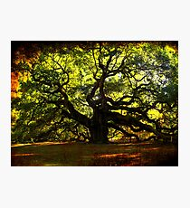 The famous Angel Oak Tree Photographic Print