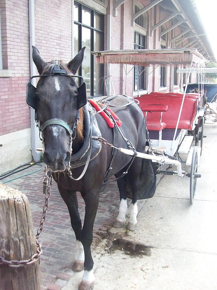 Natchez Carriage Rides by Dan McKenzie