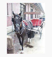 Natchez Carriage Rides Photographic Print