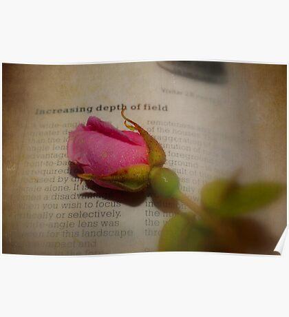 The Last Rose ~ Still Life Poster