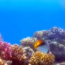 The Red Sea Takes Your Breath Away by hurmerinta